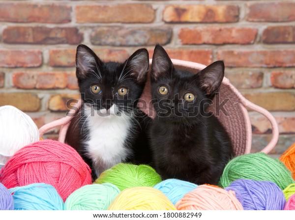 black-kitten-tuxedo-peaking-out-600w-180