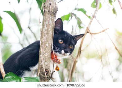 Black kittens climb trees with misbehavior