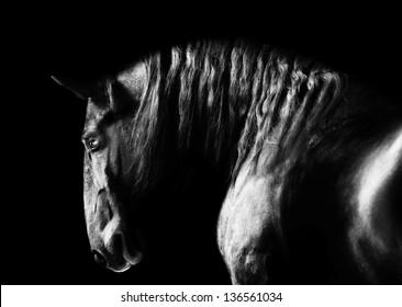 Black kladruby horse portrait on the dark background, black and white photography