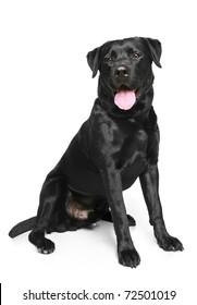 Black Labrador dog sitting on a white background