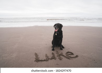 Black Labrador retriever dog sits on an Oregon beach, with his name Luke written in the sand