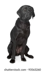 Black Labrador Retriever in front of a white background