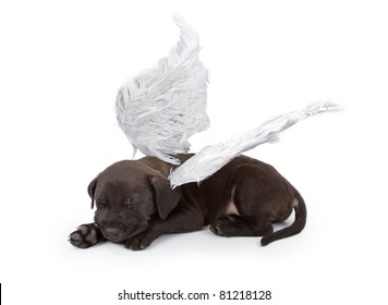 A black Labrador Retriever mix puppy wearing angel wings isolated on white