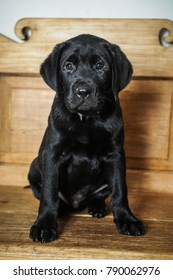 Black Labrador retriever puppy sitting on a wooden bench