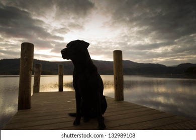 Black Labrador Sunrise