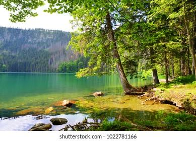 Black lake (Cerne jezero) in the National park Sumava, Czech Republic. - Shutterstock ID 1022781166
