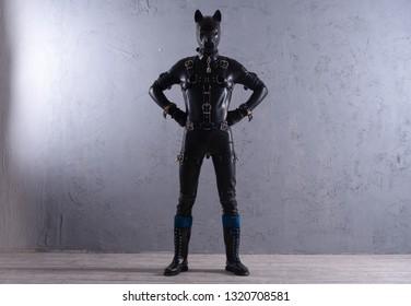 black latex man dressed in fetish dog costume on grey background
