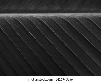 black leaves with line texture