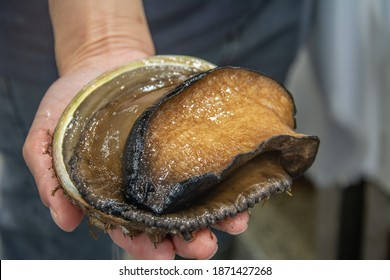 The black lip abalone, Haliotis rubra, an Australian specie of large, edible sea snail, a marine gastropod mollusk in the family Haliotidae, the abalone