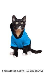 Black little kitten wearing blue cat clothes