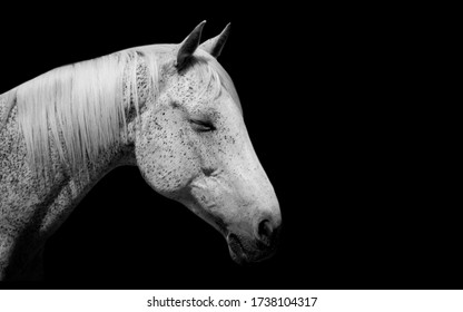 Black Little Spots White Horse Face
