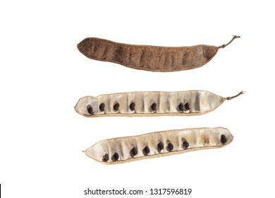 Black locust pods with small seeds isolated  on white background. Robinia pseudoacacia (white acacia) or  false acacia.