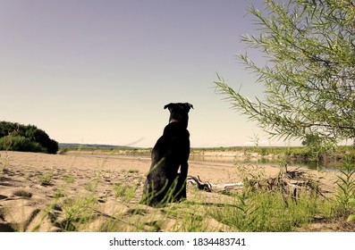 Black lonely dog thoughtfully sits with his back against the background of a beautiful river. Sepia
