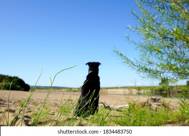 Black lonely dog sits thoughtfully with his back on the sandy beach. Blurred photo