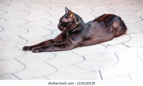Black lying cat . Relax.  isolated