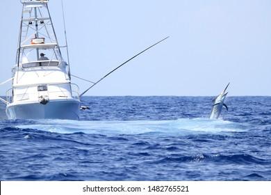 Black marlin jumps near game boat