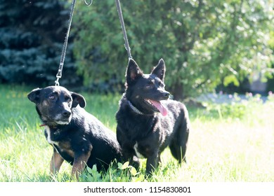 Black mixed breed dogs outdoor in summer forest green lawn grass