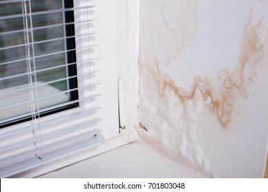 Black Mold fungus grows in the Living Room near the Window, the Walls and Ceiling are covered with Mold. Poorly installed Windows, rainwater penetrates into the Room.