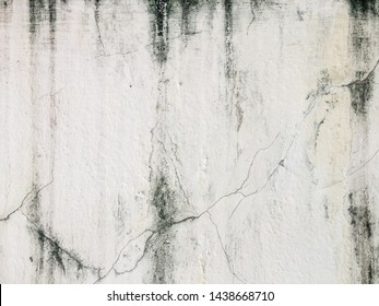 Black mold, fungus on a white wall background, bacteria on white surface