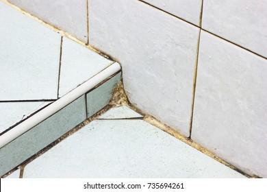 Black mold growing in bathroom wall corner dirt in the bathroom.