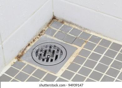 Black mold growing on shower tiles in bathroom