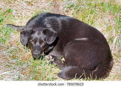Black mongrel dog sleeping in spring on green grass in warm sun