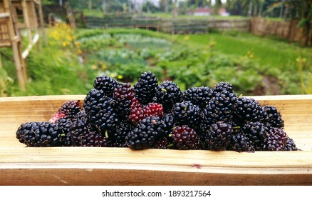 Black mulberry is a plant with black fruit, sweet taste when ripe, while when it is young, the fruit is red and sour in taste.  This young plant grows anywhere