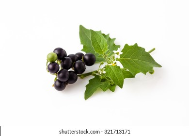 Black nightshade, fruits, leaves, poisonous plant, white background