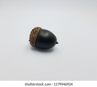 black oak tree acorn seed on white background