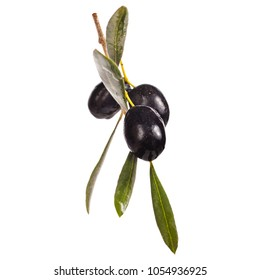 Black olives in olive tree branch isolated white background