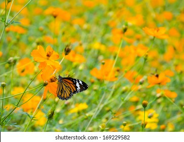 black and orange butterfly with orange flower field
