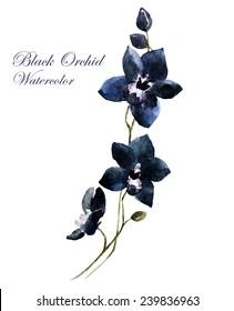 black orchid, watercolor, flowers
