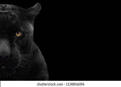 Black Panther Eyes Images Stock Photos Vectors Shutterstock