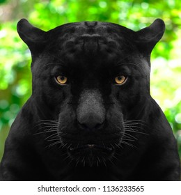black panther shot close up with green background