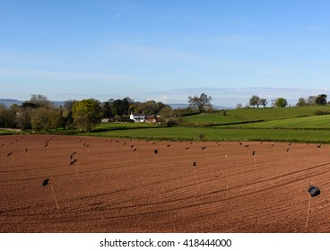 Black plastic bags take on the role of scarecrows over this newly seeded field near Taunton in the west of England.