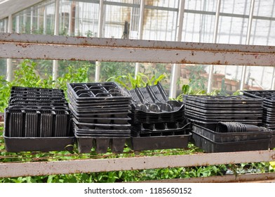Black plastic non recyclable seed trays in a greenhouse