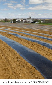 Black plastic on rows waiting for planting on produce farm