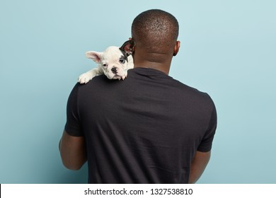 Black plump man stands back to camera, carries small puppy on shoulder, going to have walk together, carries animal home. Sad french bulldog looks away from back of its owner. Pedigree dog indoor