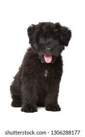 black puppy in front of a white background