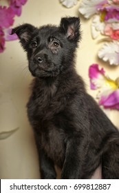 black puppy on a floral background