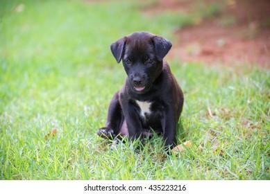 Black puppy on the grass