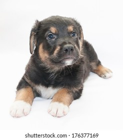 Black puppy with red spots and white legs looking up