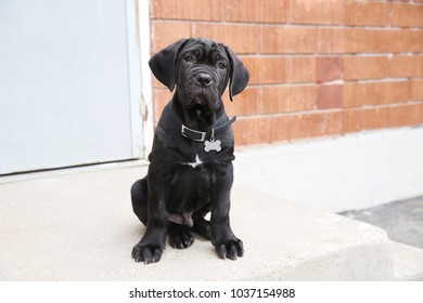 Black puppy sitting outside on steps