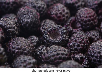 Pictures Of Black Raspberries
