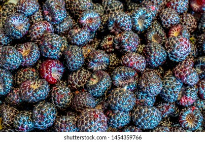 black raspberry close up scattering