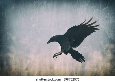 Black raven (Corvus corax) flying in moonlight.. Scary, creepy, gothic setting. Cloudy night. Halloween. Old photograph stylized with scratches and dust. Old, analog photography filter.