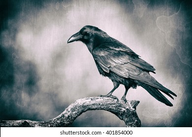 Black raven (Corvus corax) in moonlight perched on tree. Scary, creepy, gothic setting. Cloudy night. Halloween. Old photograph stylized with scratches and dust. Old, analog photography filter.