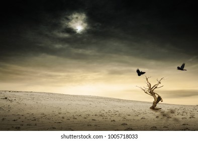 Black ravens and the old dead tree