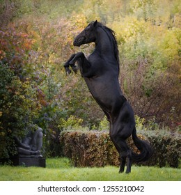 Black rearing horse on nature background, profile view