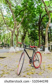 Black Red bicycle in fresh summer way park